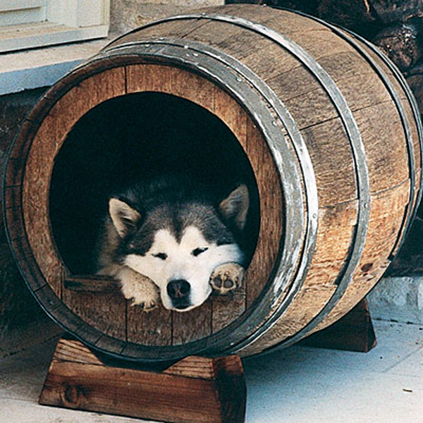 Beware of the Drunken Dog
