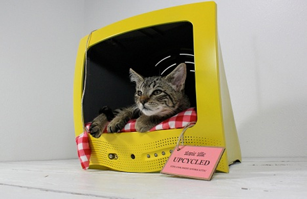 Hello Kitty, You're on TV!
