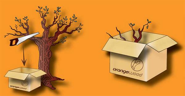 orangewood titelbild