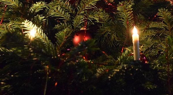 Bio-Weihnachtsbäume?