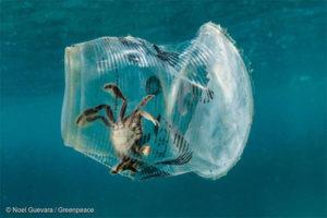 Greenpeace - Krabbe in Plastikbecher