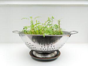 Alternativer Blumentopf