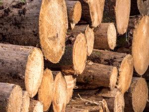 Ein Stapel von Holzstämmen.