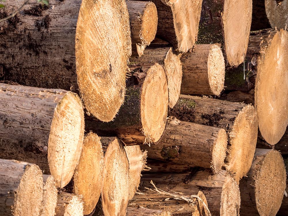 Holzmangel in Deutschland?