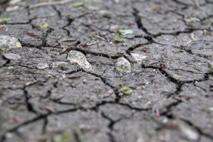 Veranstaltungshinweis: Ist das Klima noch zu retten?